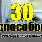 30 способов вывести мух (из квартиры, дома, дачи)