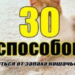 Кошачья моча: 30 способов вывести запах из квартиры