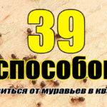 39 способов вывести муравьев из квартиры